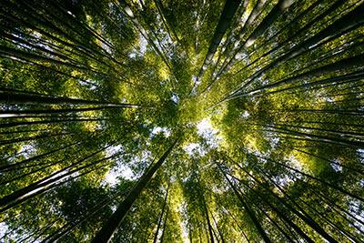 Wir pflanzen einen Baum für jeden Vertragsabschluss.